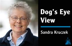 Dog's Eye View Sandra Kruczek